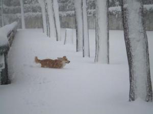 初雪ネモ2