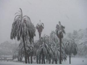 雪色やしの木