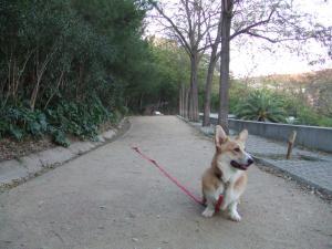 C公園お散歩