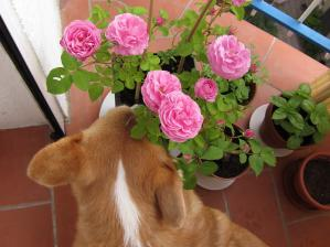 バラとネモ